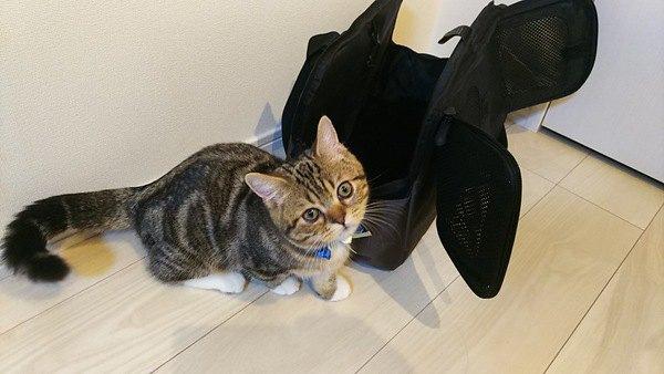 猫に伝わりやすい『ほめ方』のコツ4つ