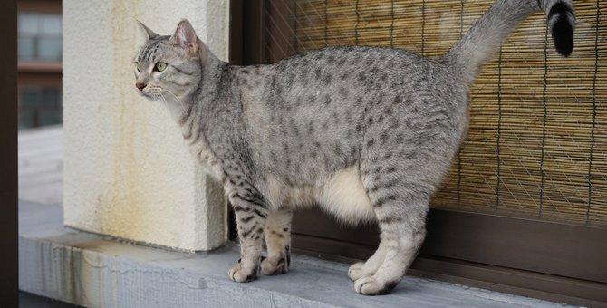 猫のルーズスキンとは?役割や病気・肥満との見分け方