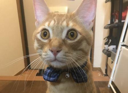 思わせぶりな猫の特徴5つ