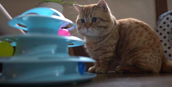 新しいオモチャの秘密に気付いちゃった猫ちゃん達?