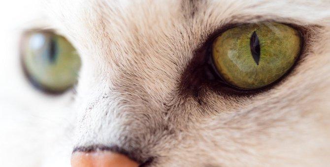 猫の目やに。原因や考えられる病気、対処法などについて