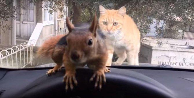 リスと猫が対面をしたら?なんともいえない猫さんの顔が笑える
