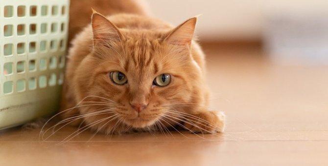猫が獲物を狙っている時にする仕草や行動4つ