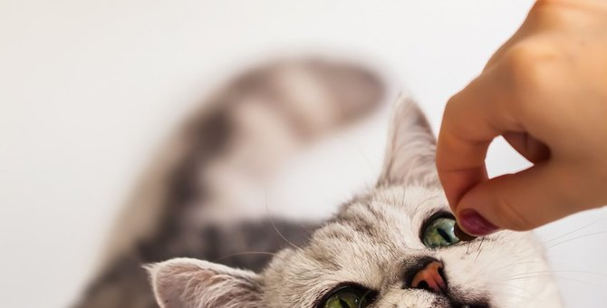 猫に必要なリンの摂取量、腎臓病との関係