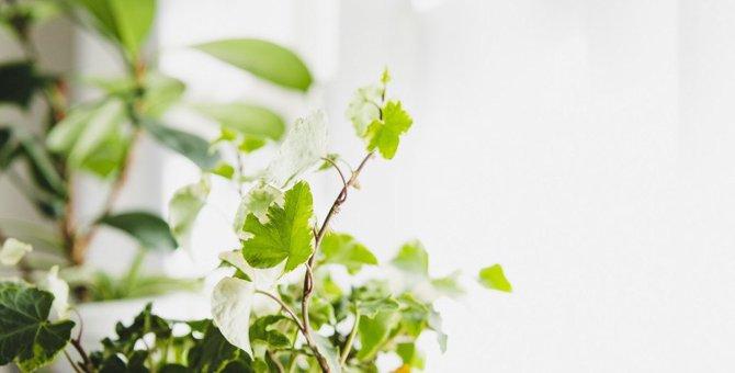 猫の死を招くことも…飼い主が絶対避けるべき『観葉植物』5つ