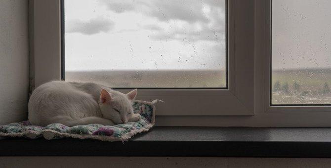 猫が『雨の日』によく寝る4つの理由