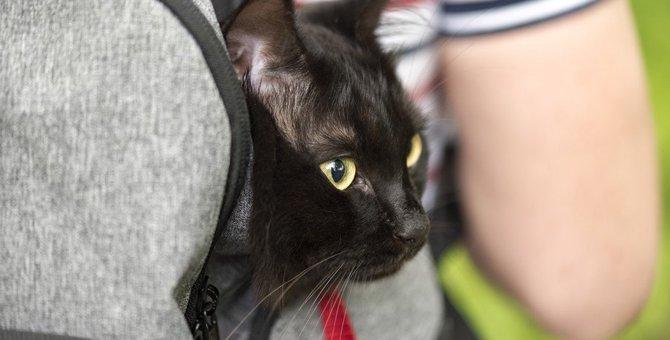 猫のリュック型キャリーおすすめ4選!選び方や使う時のメリット