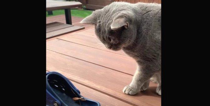 猫ちゃんのテリトリー内にやってきた思わぬ訪問客!