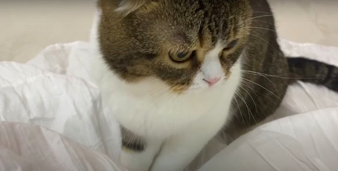 スカートで遊ぶ猫さん!いつの間にか運動会に…
