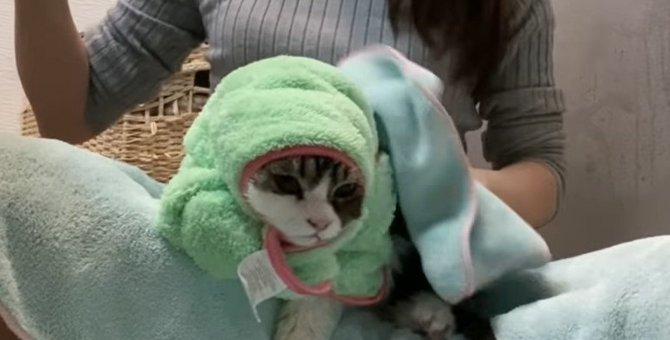 子猫ちゃん初めてのシャンプー!終わった後のタオルに包まれる姿がたまらない♡