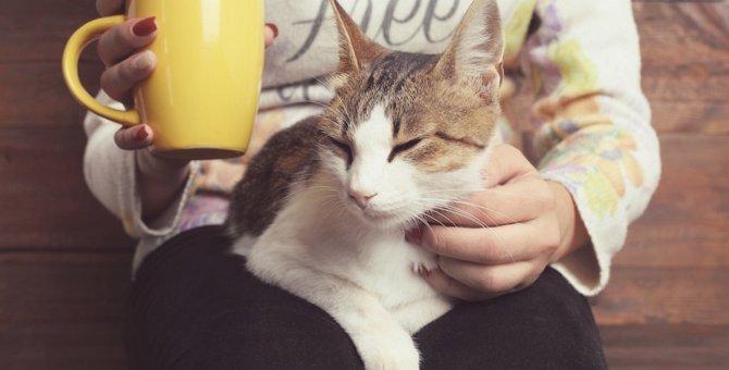 猫が飼い主の膝の上で毛づくろいをする9つの心理