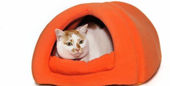 猫を室内飼いするメリットとデメリットは?必要な準備も解説