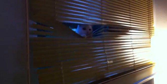 「話は聞かせてもらったにゃ」ブラインド越しに任務を確認する猫さん