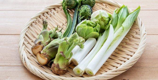 猫が食べると危険な『山菜』3選!与えてもいい山菜とは?