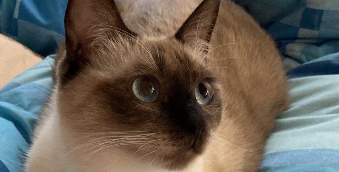 猫が飼い主にみせるとっておきの『愛情表現』3選