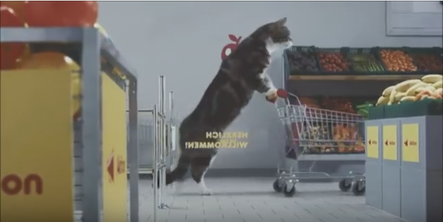 ドイツのスーパーマーケットのCMがなぜか猫だらけ!!(movie)