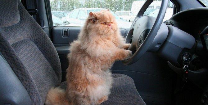 猫をドライブに連れていく際の注意点!車酔い対策や便利グッズまで