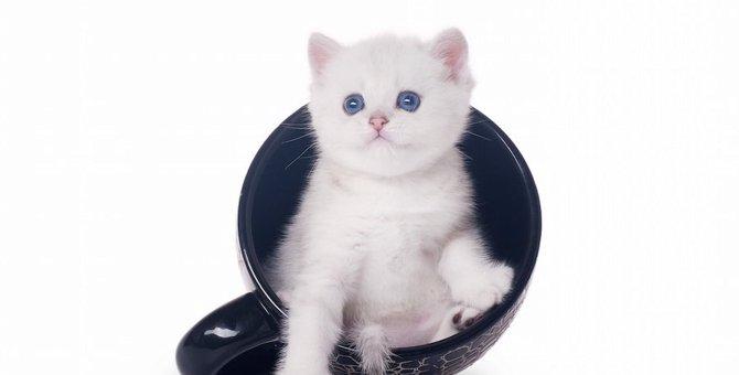 猫のマグカップおすすめ30選!プレゼントにも喜ばれるアイテム