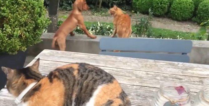 猫にやられた友達犬のために、仇をうつ猫ちゃん