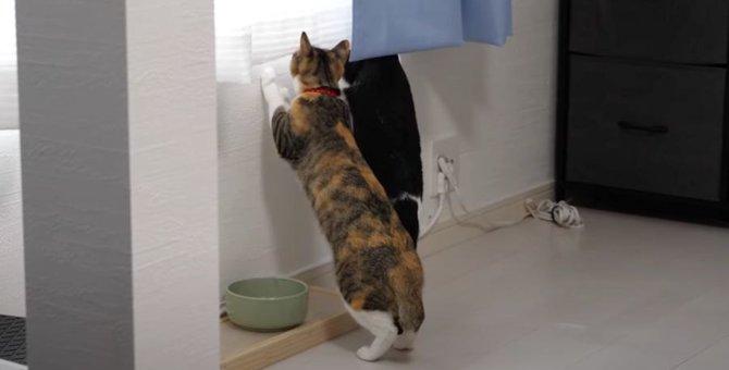 仲良く並んで外を立ち見する猫ちゃんたちが可愛い♡