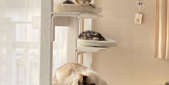 降りたくても降りれない猫さんの姿に爆笑必至!多頭飼いならではの絶景が話題♡