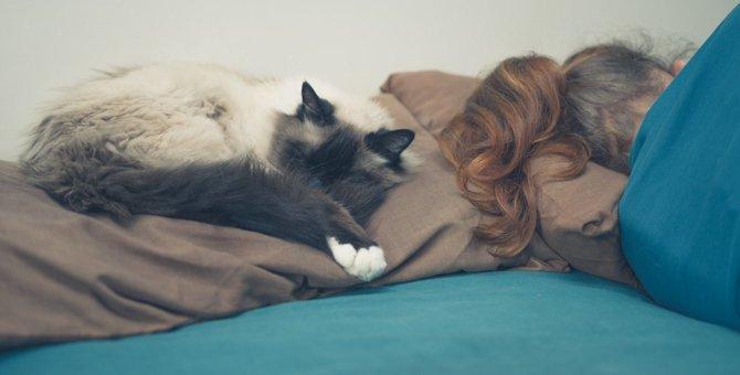 猫が飼い主の『枕の上』で眠るワケ4つ