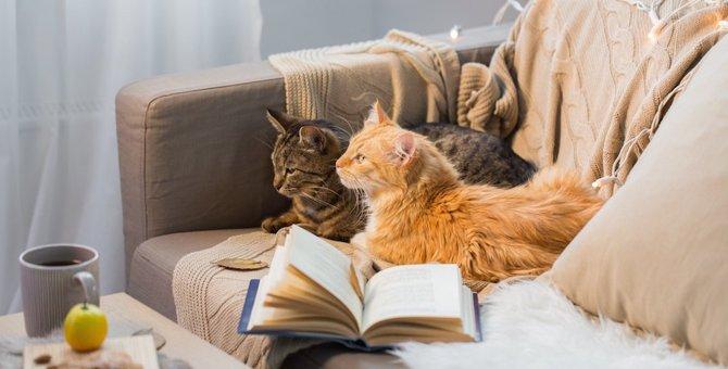 猫と飼い主がリビングで快適に過ごせる方法
