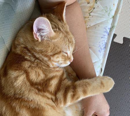 猫が飼い主の隣に座ってくるときの気持ち5つ