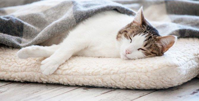猫用のホットカーペットで寒さ対策を!商品を選ぶ時のポイントや活用方法