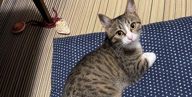 【話題】体より長い!?子猫さんの姿に二度見必至!