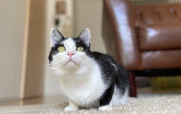 「猫の写真が上手く撮れない…」3つの理由と撮影のコツ