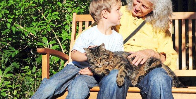 抱っこを嫌いな猫が抱っこ好きに変わる!3つの方法
