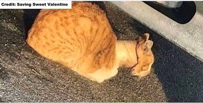 ガムテープの芯が首にスッポリとはまった猫の救出劇