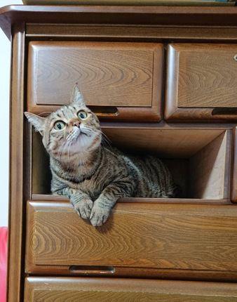 猫と一緒にお引越し!新居で注意すること5つ