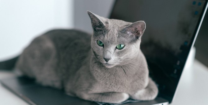 猫が『キーボード』に乗りたがる4つのワケ!やんわりどいてもらう方法とは?