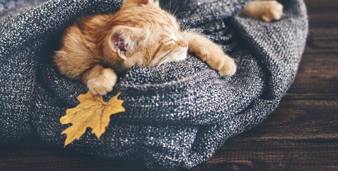 トラ柄猫の魅力!柄によって違う種類や性格について