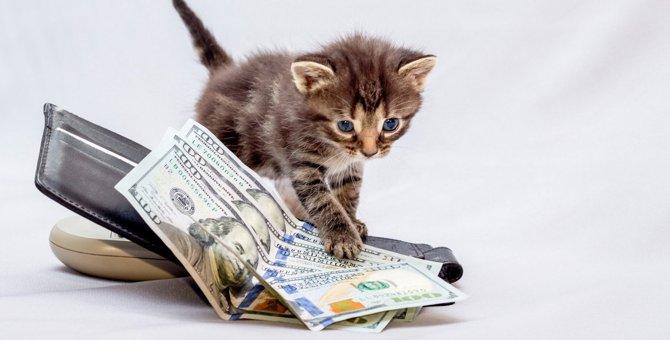 猫にかかる『治療費』はどれくらい?よくある病気から入院費まで徹底解説!