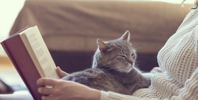 飼い主なら知っておきたい!猫のための『法律や条例』2選