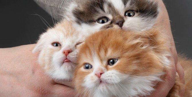 成長で猫の毛の色が変わる?猫の種類の豆知識