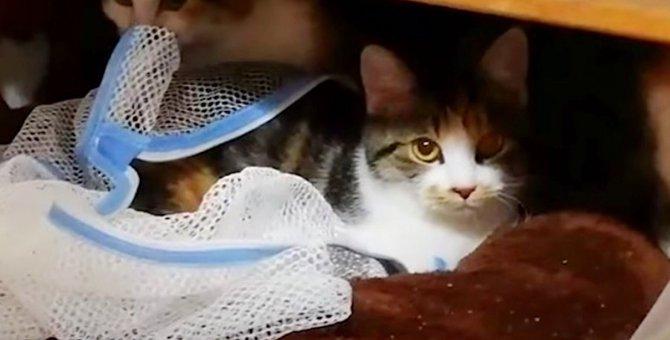 コロナ禍で失業の飼い主さん…飼えなくなった猫7匹の行方は?No.3