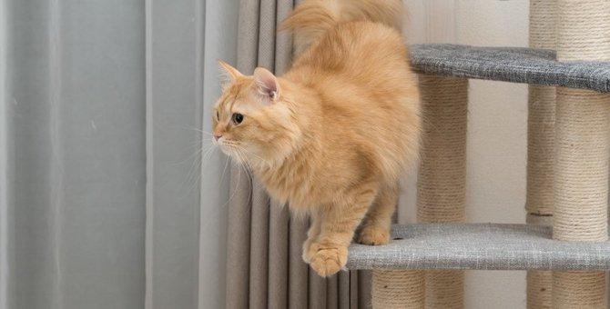猫の事故を防ぐ『キャットタワー』の安全対策3つ