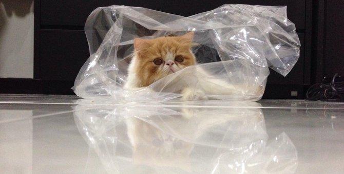 猫がビニール袋を好む3つの理由