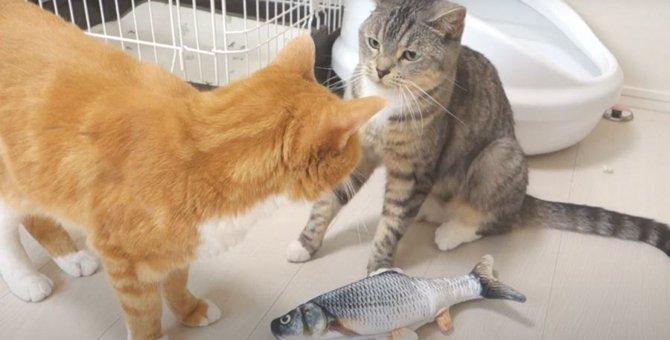 姉猫ちゃんにビクビクしている猫ちゃんがかわいそうだけど可愛い