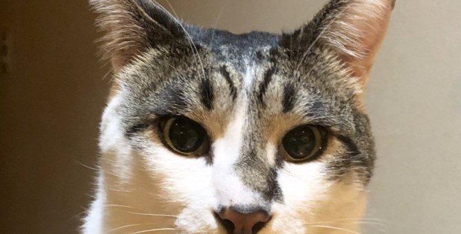猫が飼い主の『気を引きたいとき』にする仕草3つ