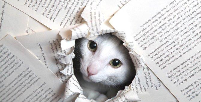 """持ってると「ちょこっと優越感♪」猫好きの為の""""ねこ検定""""!?"""