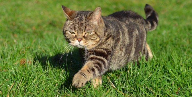 猫が「のそのそ」歩く6つの心理
