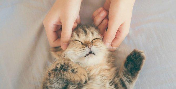 猫の乳腺腫瘍とは その原因と主な症状
