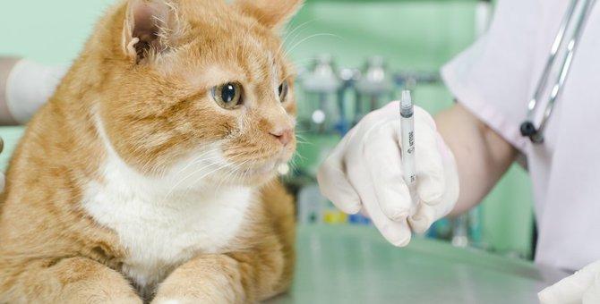 猫の糖尿病の末期症状5つ、治療の方法やその後の過ごし方