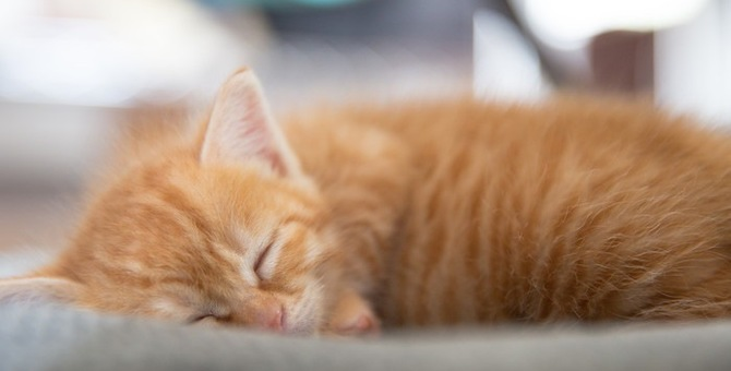 愛猫の生まれ変わりのように現れた保護猫