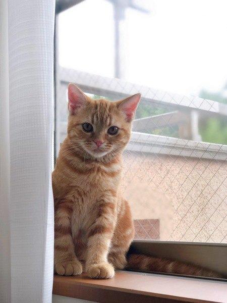 猫が二度見しちゃう5つのシチュエーション
